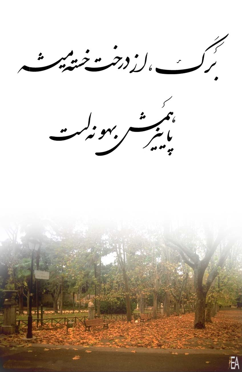 www.hamtaraneh.com