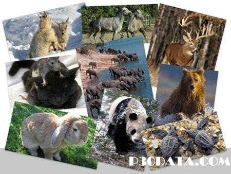 55Wonderful Animals HQ Wallpapers