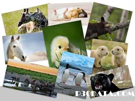 50Beautiful Animals HD Wallpapers
