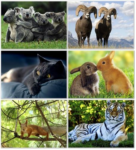 SuperPack Beautiful Animals HD Wallpapers